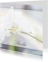 Sterkte kaarten - Sterkte - witte orchidee