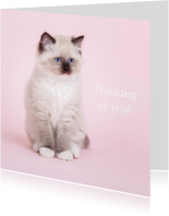 Liefde kaarten - Thinking of you - kat - roze