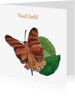 Dierenkaarten - Tropische vlinder