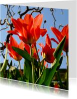 Bloemenkaarten - tulpen met hazelaar