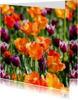 Bloemenkaarten - Tulpenveld oranje paars OT