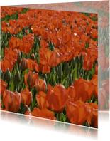 Bloemenkaarten - tulpenveld rood