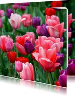 Bloemenkaarten - Tulpenveld roze paars rood OT