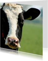 Dierenkaarten - Typisch Hollands - koe
