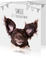 Verjaardagskaarten - Verjaardag   A doggy birthday smile!