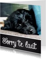 Verjaardagskaarten - Verjaardagskaart hond sorry te laat