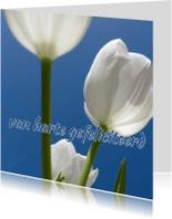 Verjaardagskaarten - Verjaardagskaart tulpen - LB
