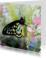 Dierenkaarten - Vlinder geel zwart