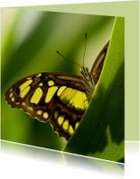 Dierenkaarten - Vlinder kijkt je aan vanachter een blad
