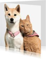 Dierenkaarten - Vriendjes voor het leven