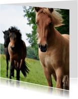 Dierenkaarten - Wilde paarden