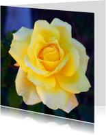 Bloemenkaarten - Zachtgele roos