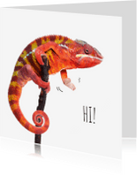 Zomaar kaarten - Zomaar - Kameleon - Saying Hi!