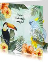 Zomaar kaarten - Zomaar tropische vogels