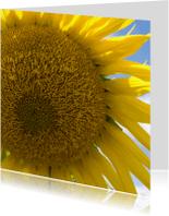 Bloemenkaarten - Zonnebloem uit frankrijk