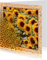 Bloemenkaarten - Zonnebloemen in veld