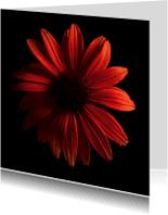 Bloemenkaarten - Zonnenhoed