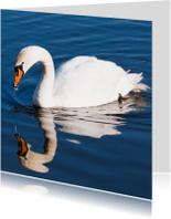 Dierenkaarten - Zwaan en spiegelbeeld
