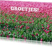 Bloemenkaarten - 14191 Tulpenveld groetjes
