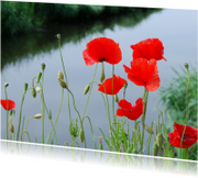 Bloemenkaarten - 14224 Klaprozen waterkant