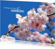 Sterkte kaarten - 15266 Sending you sunshine