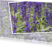 Bloemenkaarten - Bloemenkaart Lavendelveld