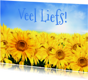 Bloemenkaarten - Bloemenkaart Liefs - BK