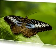 Dierenkaarten - Bruin-blauw-witte vlinder