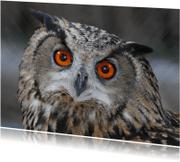 Dierenkaarten - Dierenkaart met uil