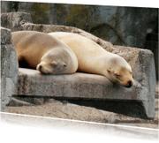 Dierenkaarten - Dierenkaart zeeleeuwen