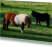Dierenkaarten - Fotokaart pony