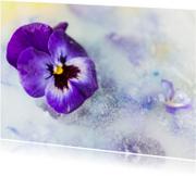 Bloemenkaarten - Frozen viooltje