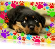Dierenkaarten - Hondenpootjes - DH
