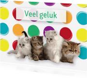 Dierenkaarten - Katten kaart - Remco