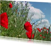 Klaprozen in bloemenveld