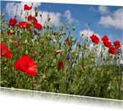 Bloemenkaarten - Klaprozen in het veld