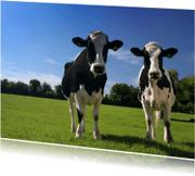 Dierenkaarten - Koe en Koe