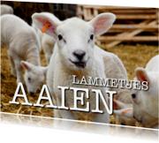 Dierenkaarten - Lammetjes aaien - OTTI