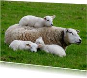 Dierenkaarten - Lentekaart - Moederschaap met 3 lammetjes