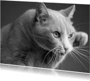 Zomaar kaarten - Love for cats