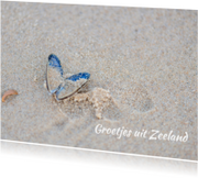 Ansichtkaarten - Mossel op het strand
