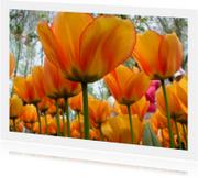 Bloemenkaarten - Oranje Boven Tulpen - wenskaart
