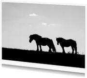 Dierenkaarten - paarden op de dijk