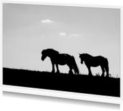 paarden op de dijk