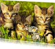 Dierenkaarten - Poezen met muisje