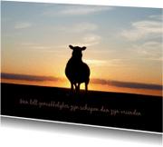 Vriendschap kaarten - Schaap zonsondergang - BK