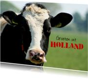 Vakantiekaarten - Typisch Hollands - koe 1