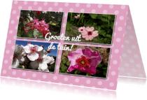 Ansichtkaarten - Ansichtkaarten - Bloemengroetjes