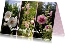Bloemenkaarten - Ansichtkaarten - Rozengroet