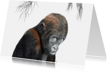 Kunstkaarten - Baby-gorilla 'Adjibolo'
